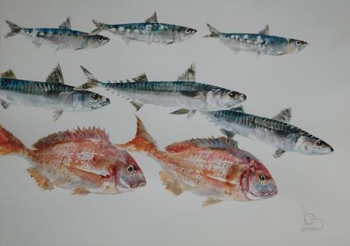 maquereaux-sardines-pageots-1